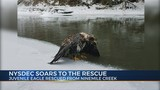NYSDEC Soars To The Rescue